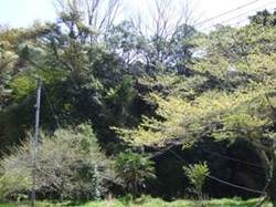 2007_04140015